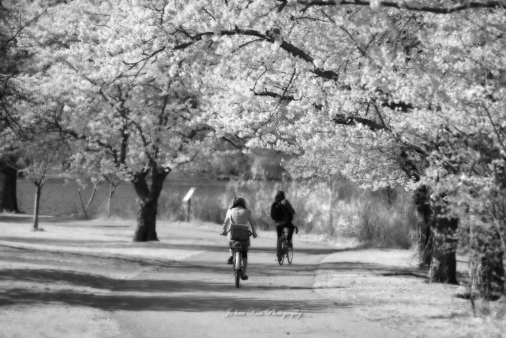 White Spring by Jo han Kim
