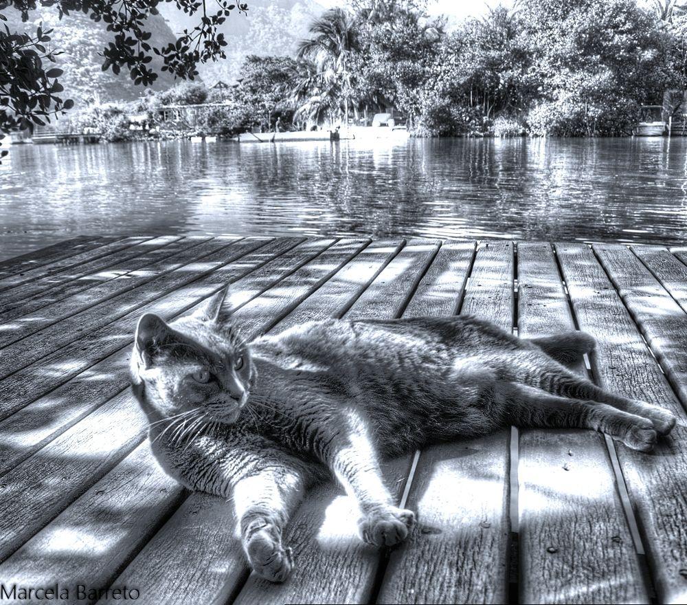 gato1 by marcelabarreto737