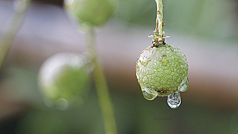 wet and wet fruit by jepretbuk