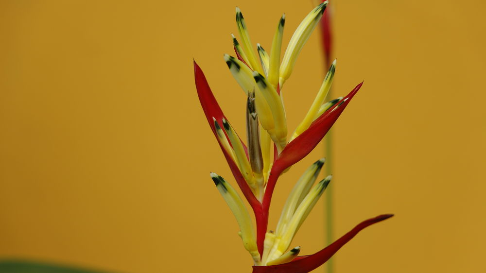 Photo in Random #jepretbuk #flower #naturephotography