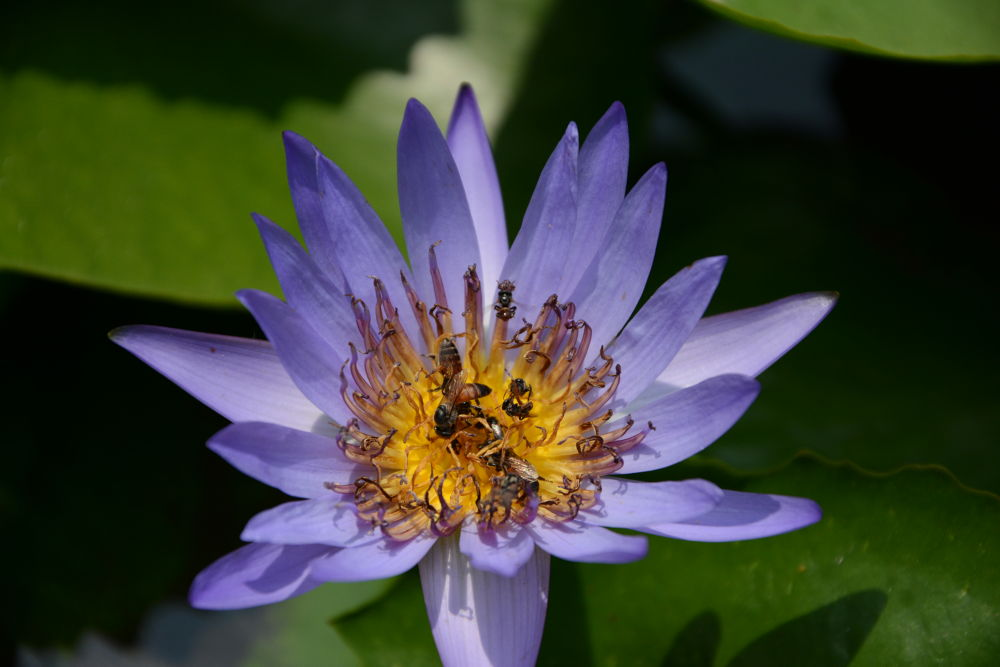 macro, flower in grand palace, thailand by wiwitsriwahyuni