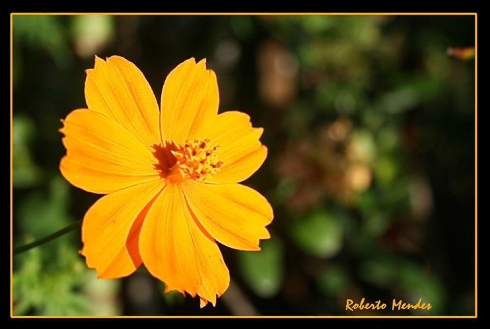Flor 23 by Roberto Mendes