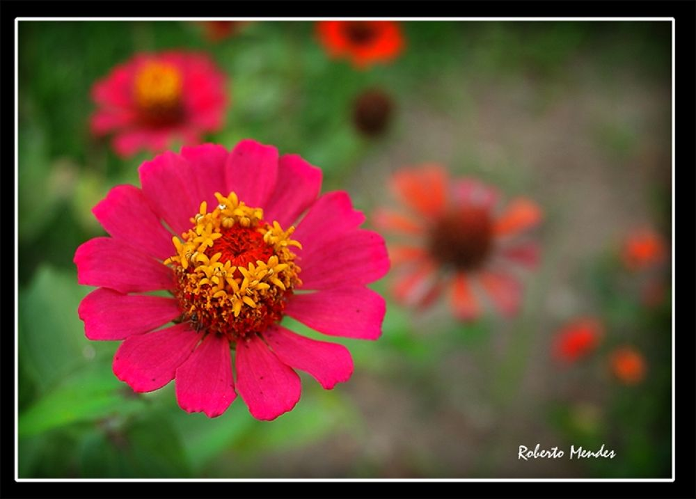Flor 44 by Roberto Mendes