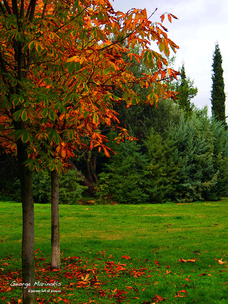 Autumn Colors by george marinakis