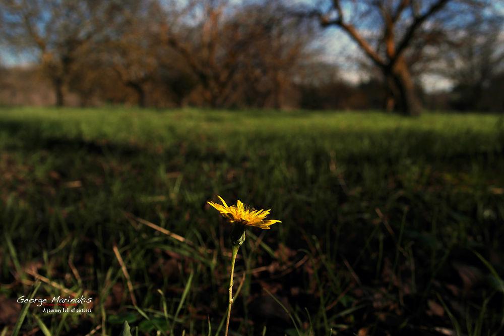 Winter Flower by george marinakis
