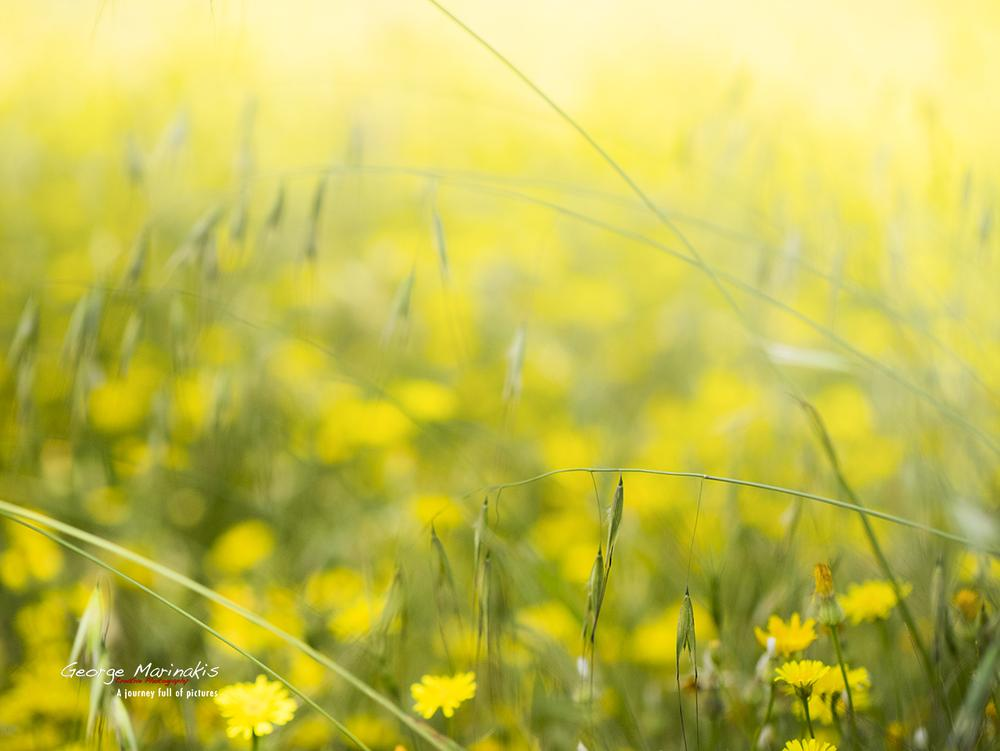 Photo in Nature #nature #spring #plants #yellow