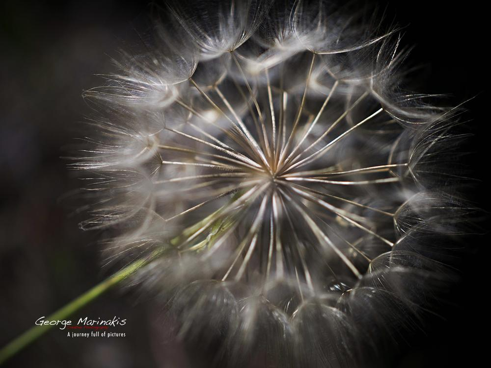 Photo in Macro #light #ball #flower #macro #details #spring