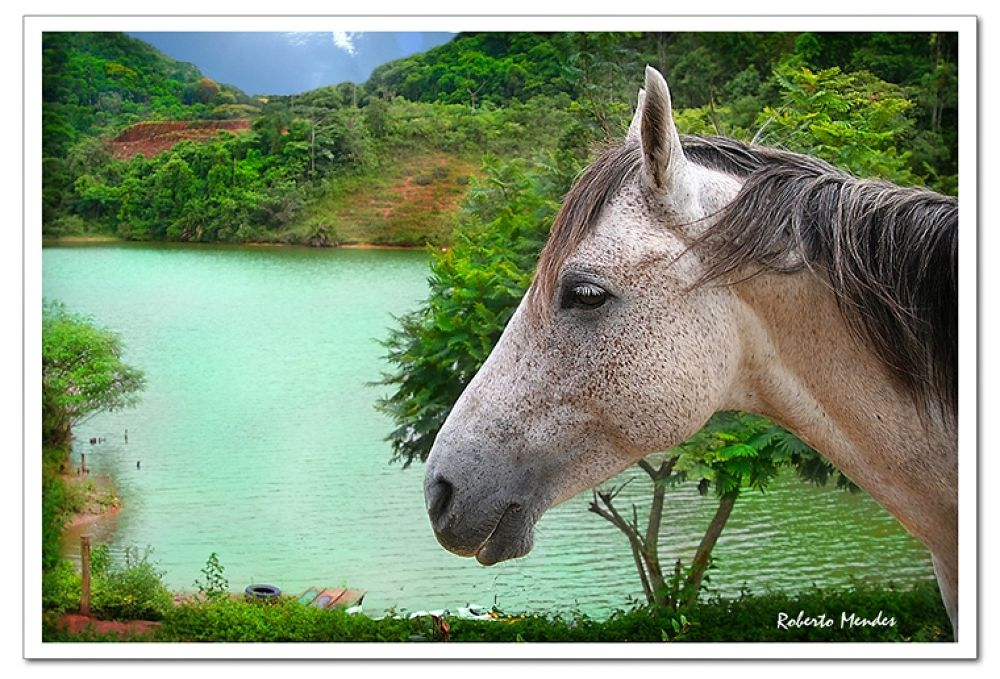 Cavalinho 2 by Roberto Mendes