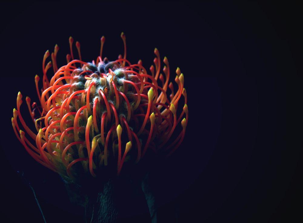 medusa by zzzvire