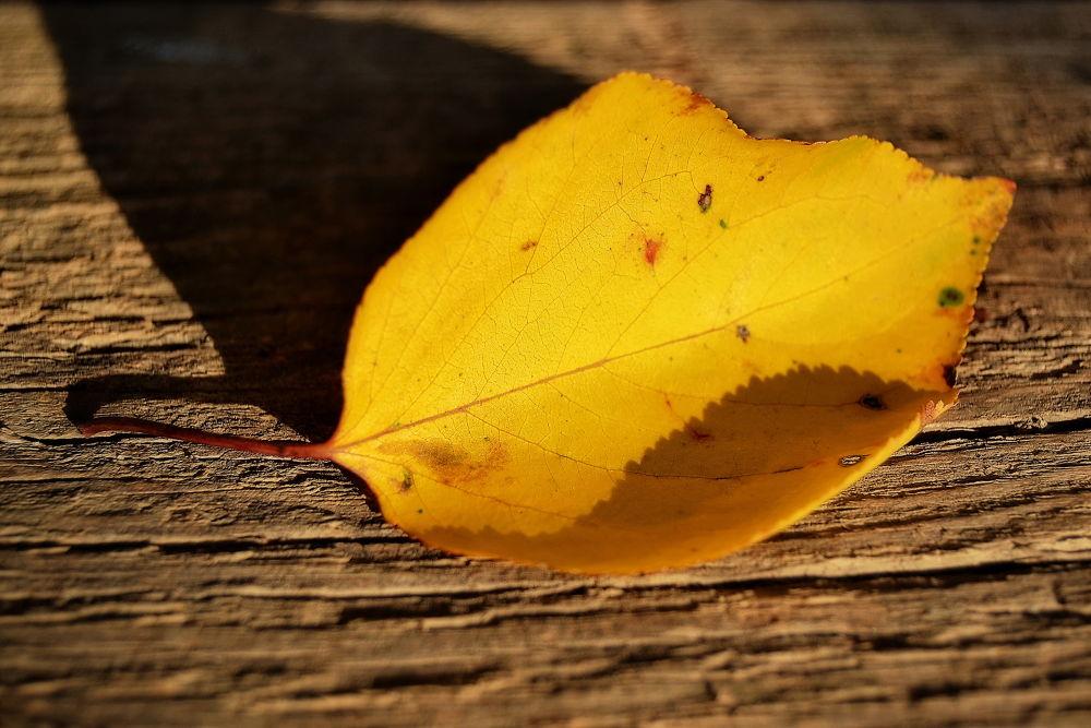 Yellow by Cristi Klimai