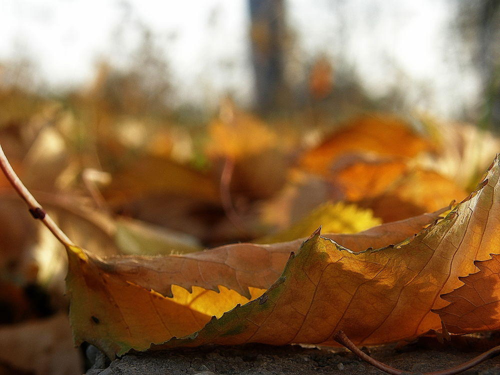 Covor de frunze by Cristi Klimai