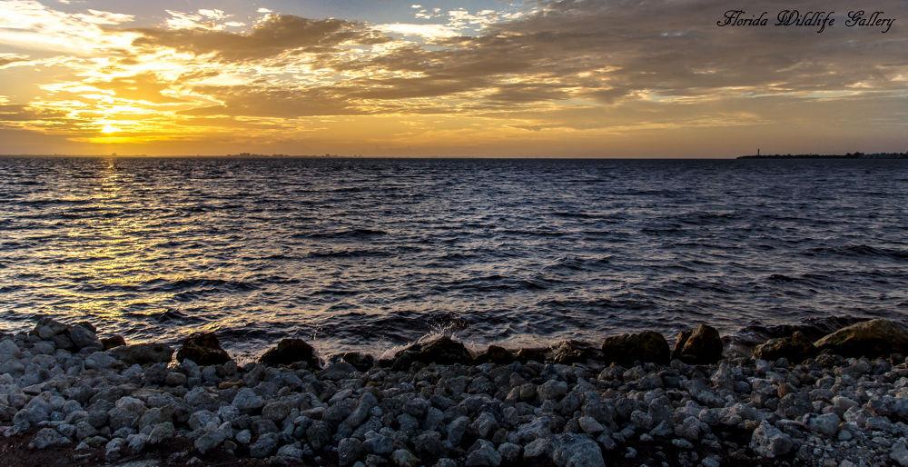 Sanibel Island, FL Sunrise by Florida Wildlife Gallery