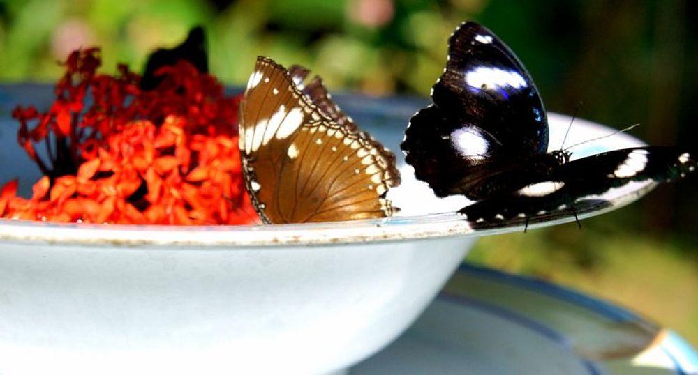 Butterflies by alvinlianza