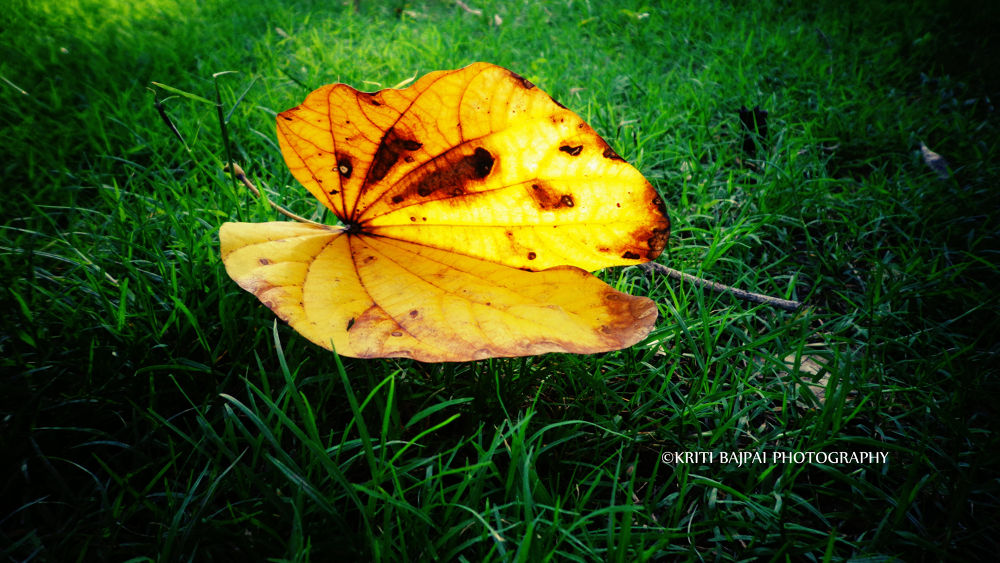 Photo in Random #nature #green grass #leave #ypa2013 #kritibajpaiphotography