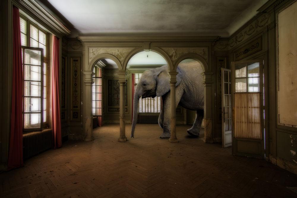 Photo in Random #decay #urbex #elephant