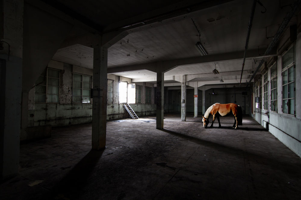 Meeting with a Horse by anthonysuply
