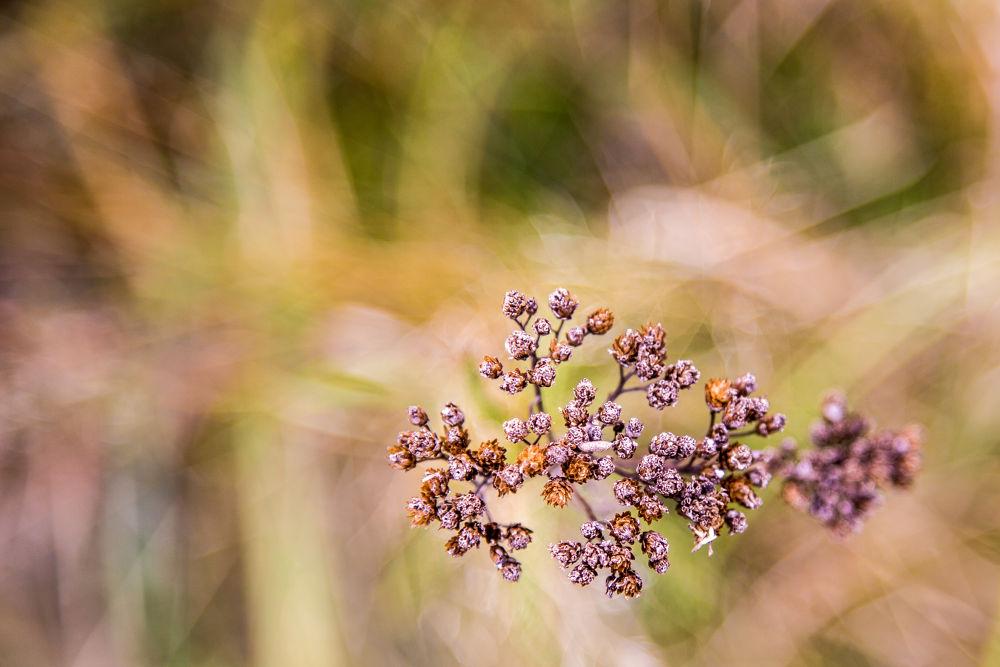 flowers by marcin januszewski
