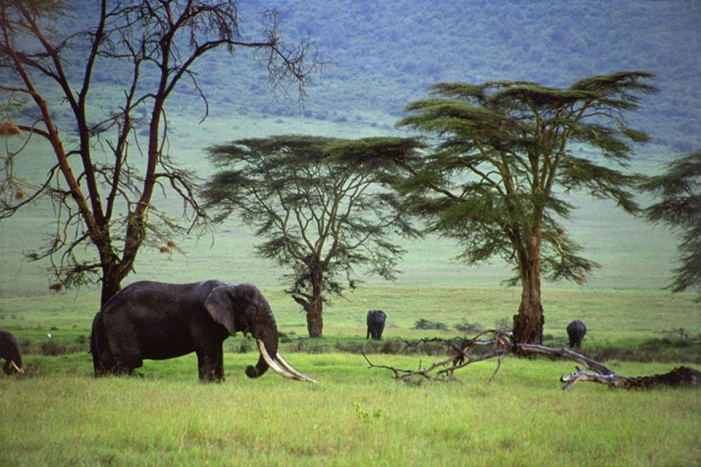 Tanzania2 by arashkarimi