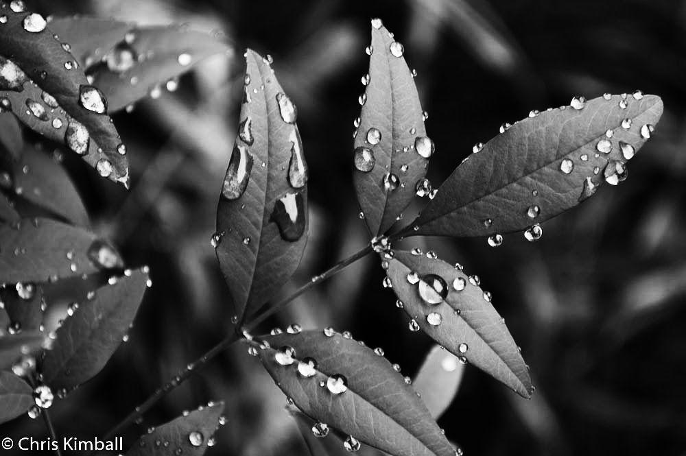 Water Drops by kimballorama