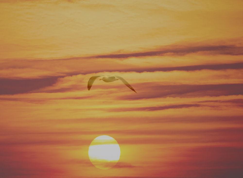 tramonto al volo by ferrarifra