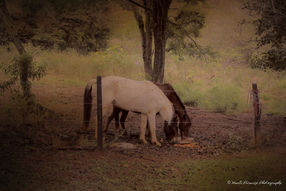 Horses by marlipicanco