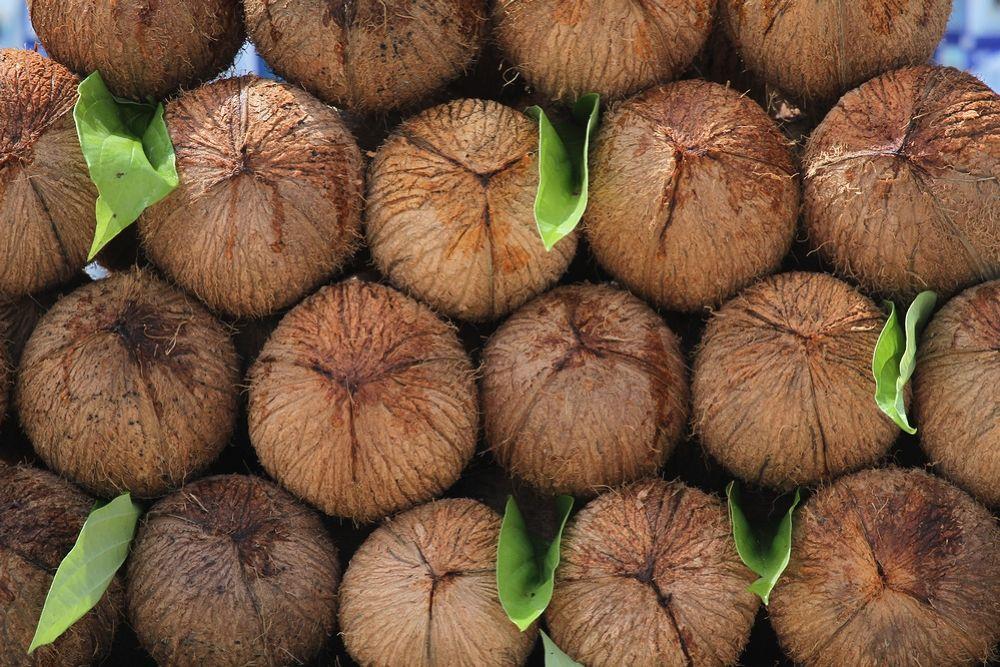 Coconut arrnged for prayer by Dr.C.S.Nagraj