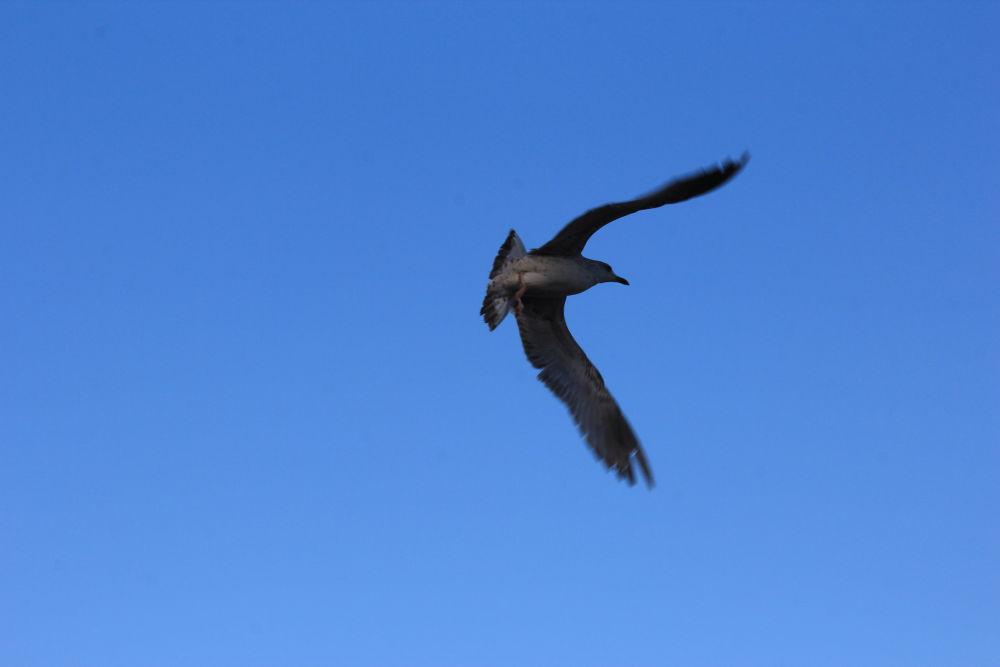 mybird by DEMETSINMAZ