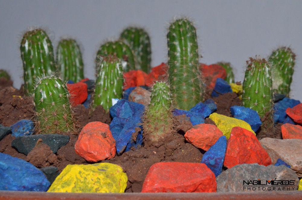Cactus by Nabil MROZIYA