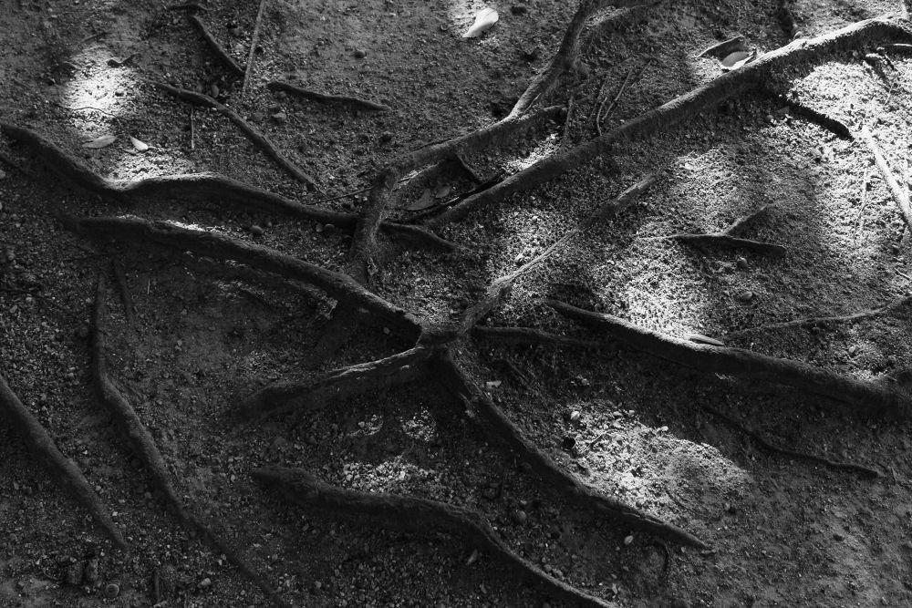In the Garden #2 by Manabu Moriwaki