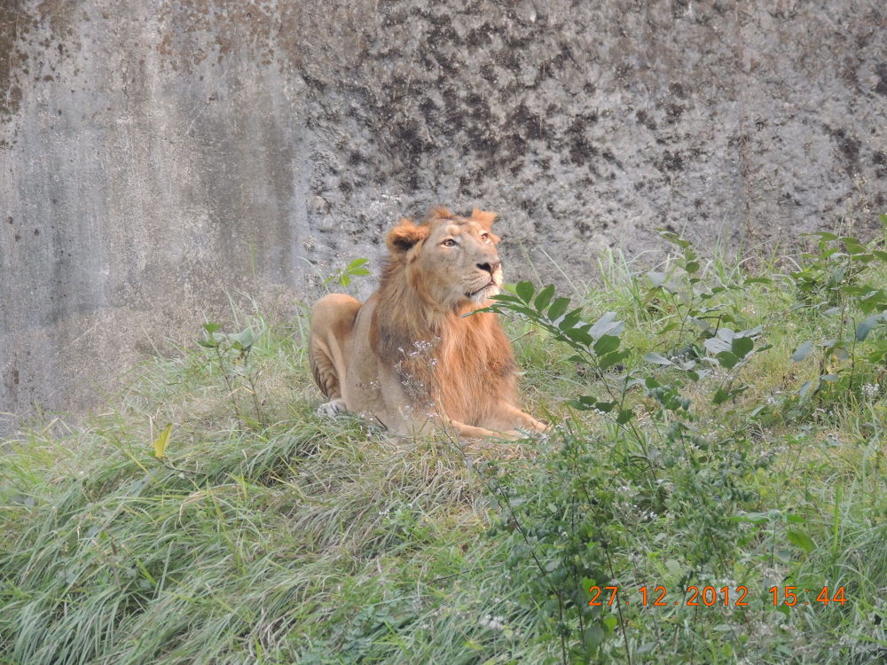 The Lonely King! by Amritava Roy