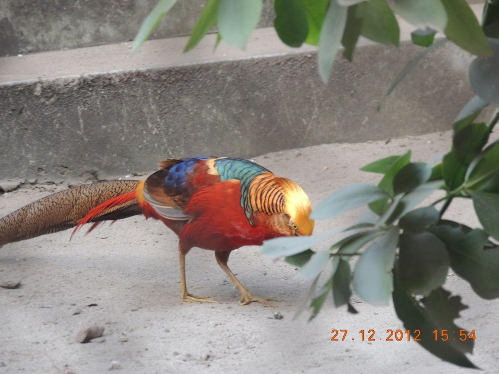 A Beautiful Bird. by Amritava Roy