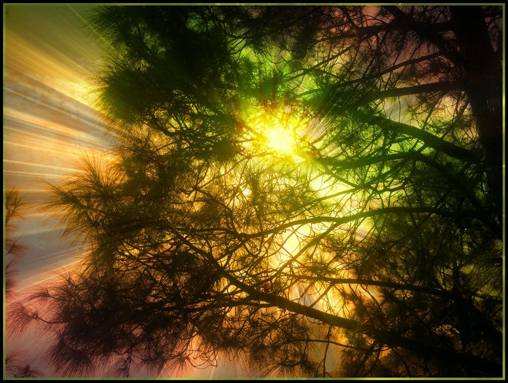 SUn shine  by bilawalbali3