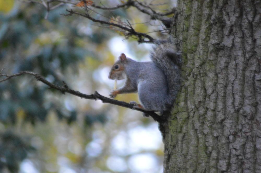 squirrel stole my mcdonlds chip by Chubnut