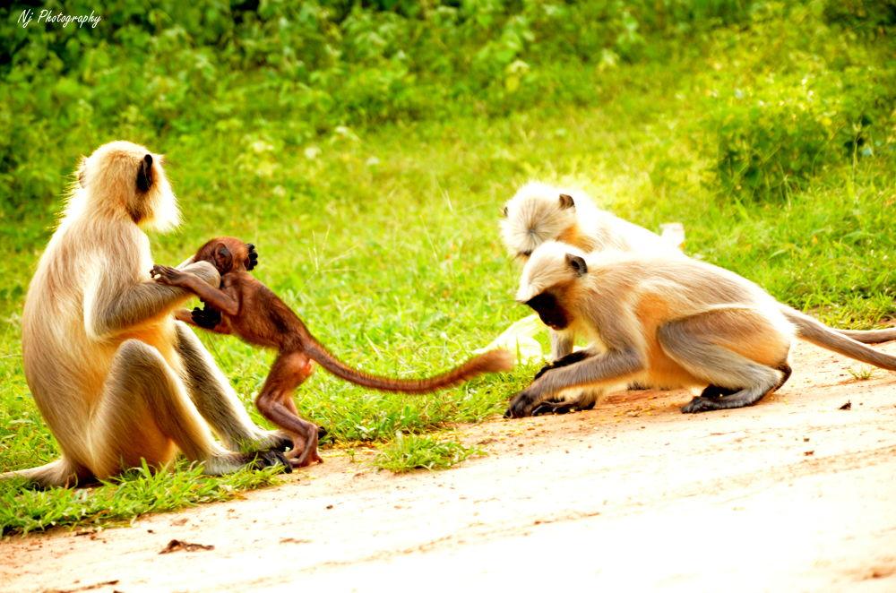 Monkey by niravjingar51