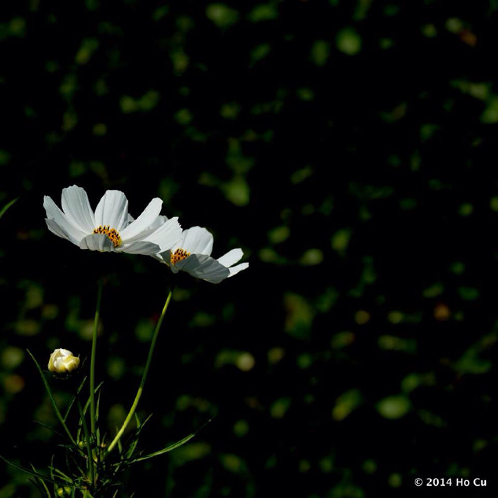 IMG_4318 by Ho Cu
