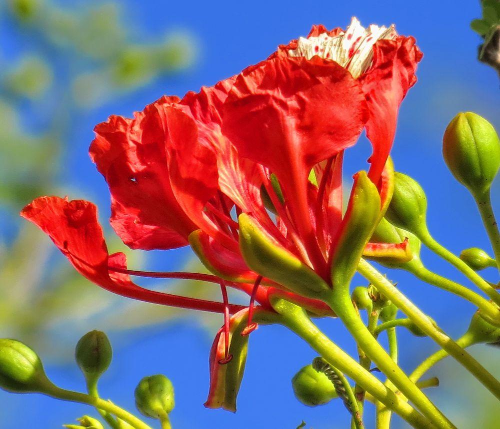 Flaboyant flower by Nestor