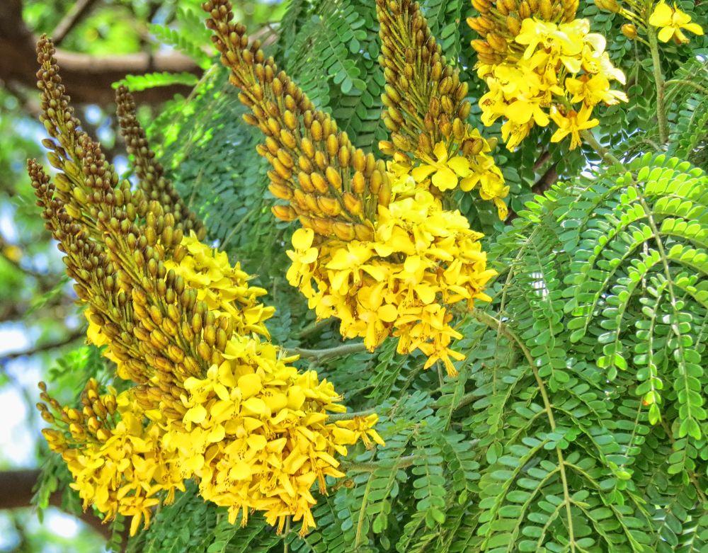 Gold flower by Nestor