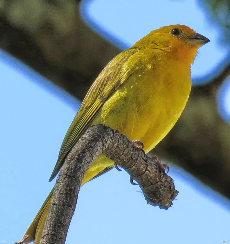 Photo in Nature #bewiahn #nature #brasil