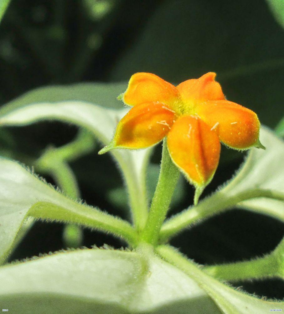 Detail orange by Nestor
