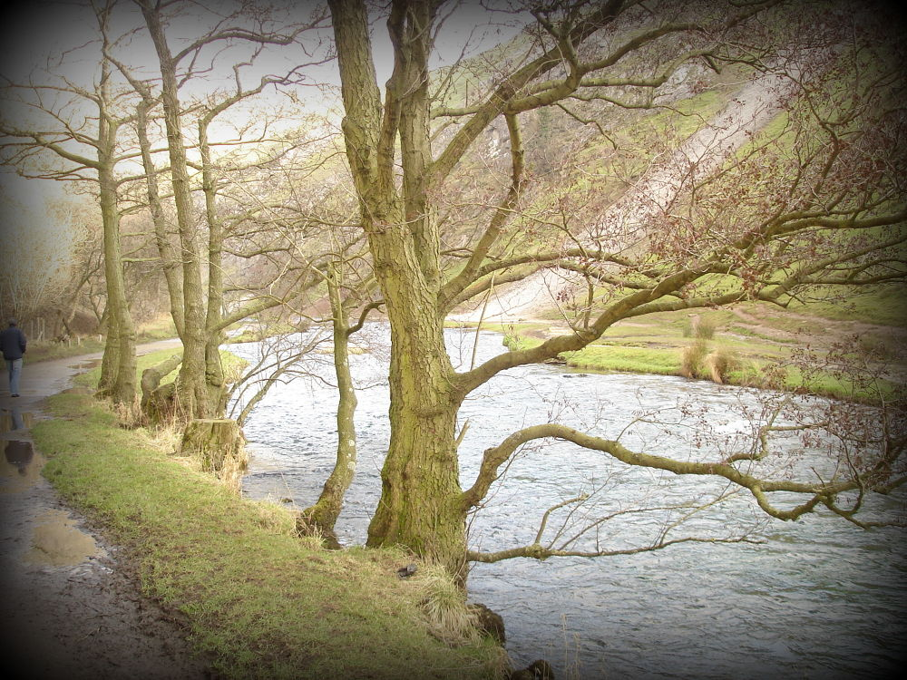DSC02831 trees at river side dove dale by craiggriffiths1485