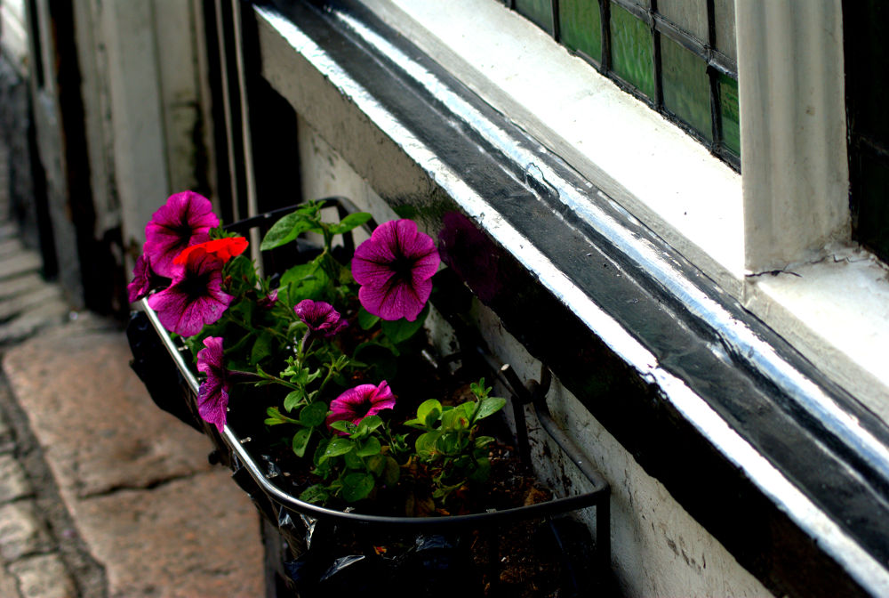 window planter by craiggriffiths1485