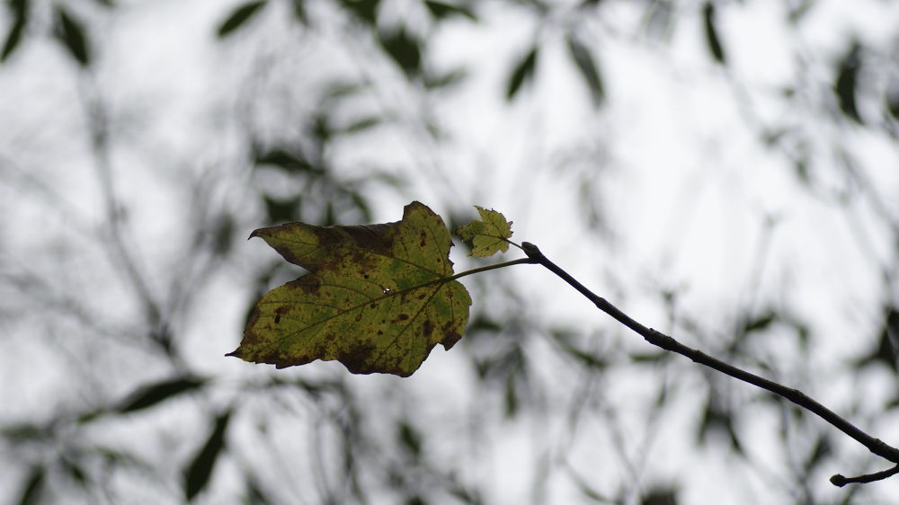 leaf and twig by craiggriffiths1485