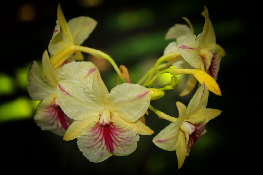 Orchids & Orchids (11) by Jorge Coromina