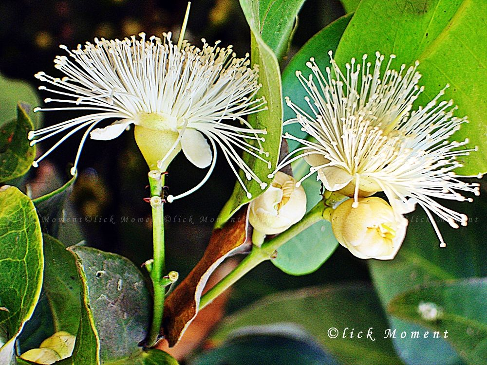 ~~~ Flower ~~~ by Riyead Mahmud