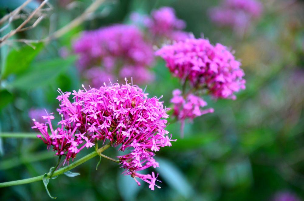 flores flores  by FabinhoBMendes