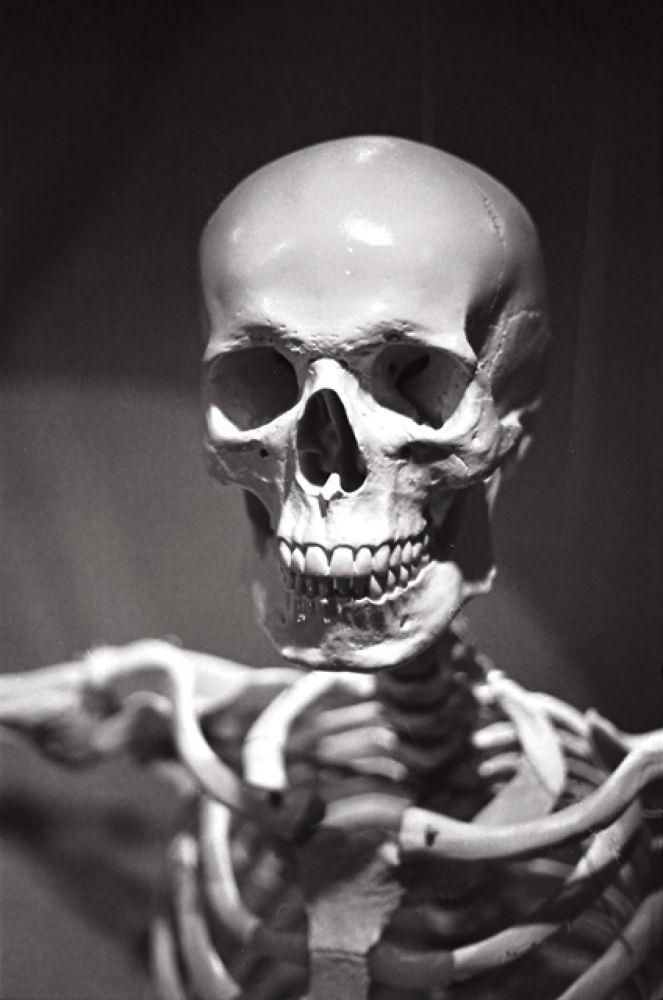 Skull by Sebastian Bojek