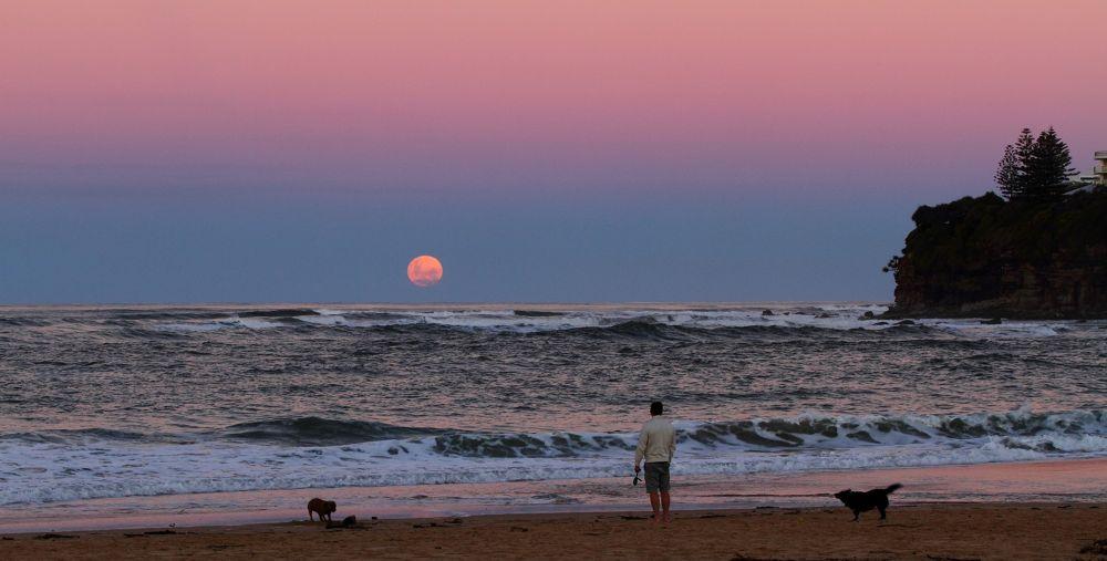 Super moonrise at Moffat Beach by Howard Ferrier