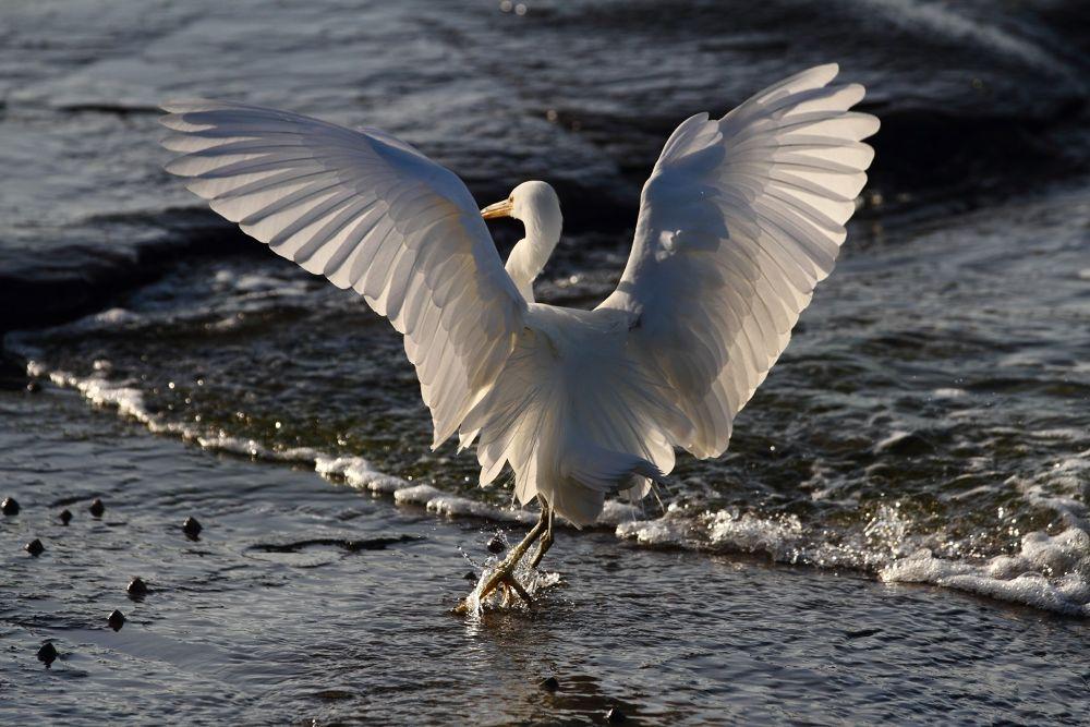 Graceful landing by Howard Ferrier