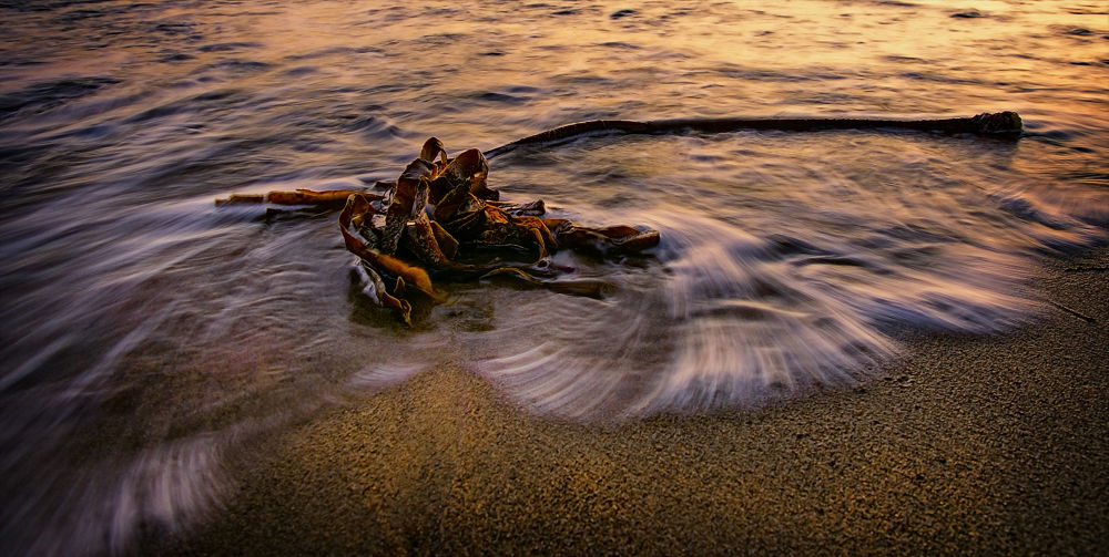 seaweed by Ray Bilcliff