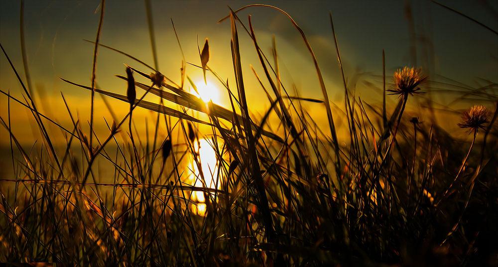 light-grass by Ray Bilcliff